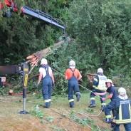 Baum auf Stromleitung